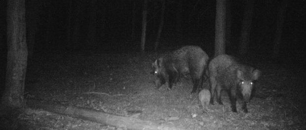 Seznamte se s fotopastmi značky FOXcam