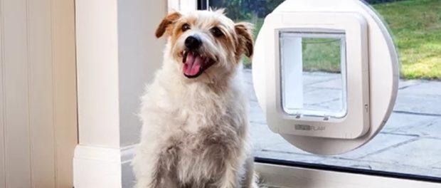 Elektronická dvířka pro psy