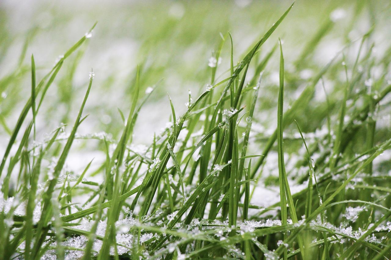 Travní koberec – výhody, cena, údržba