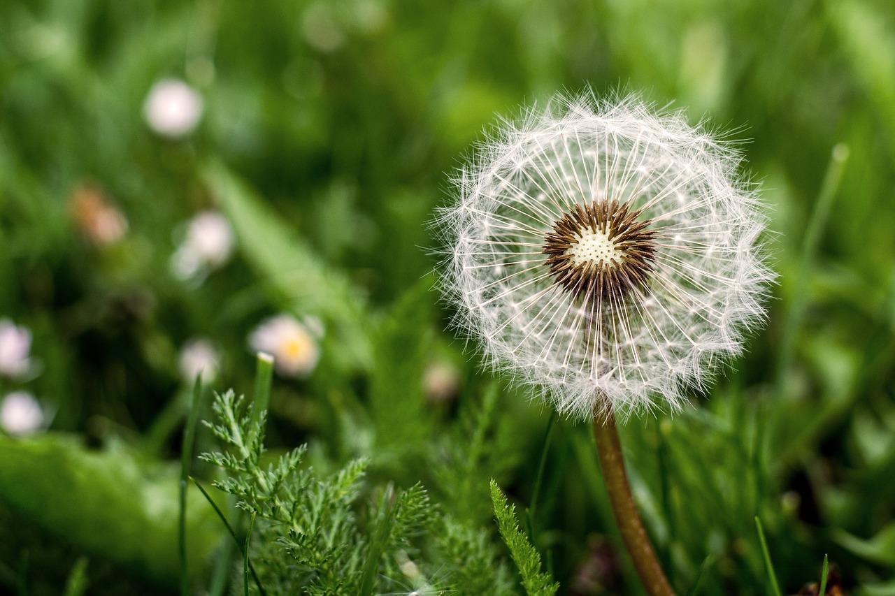 Péče o trávník v létě