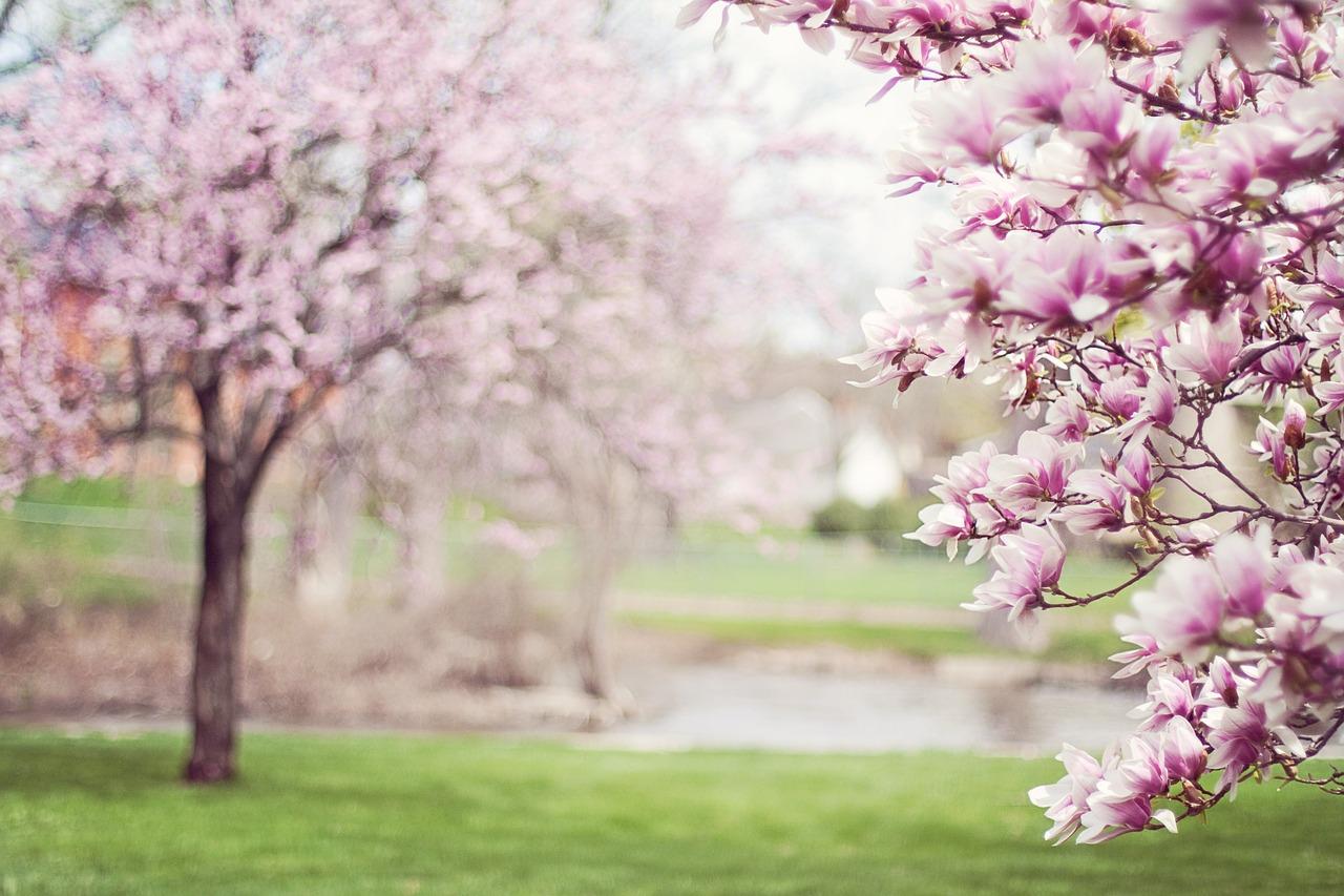 Jarní výsadba keřů a ostatních rostlin