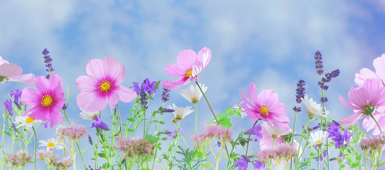 Pusťte se do oživování zahrady