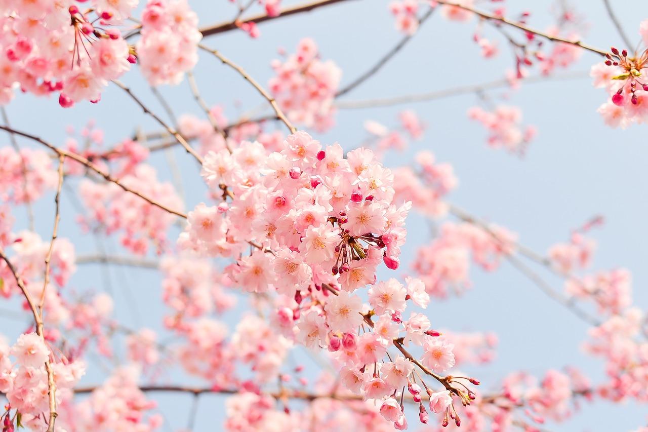 Nezapomínejte na jarní prořezávání stromků